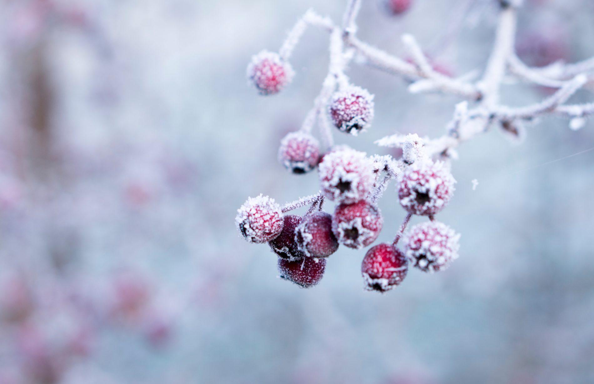 Prévenir… les maux d'hiver !!!